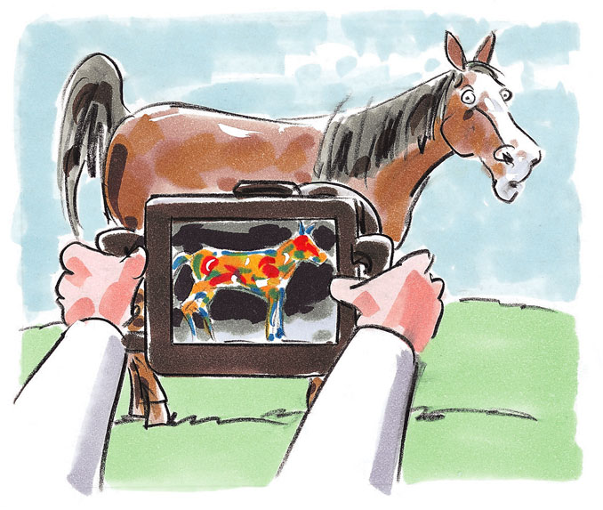 horse/with portable x-ray machine