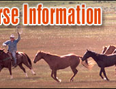 Q Horse Names Horse Names Beginning with